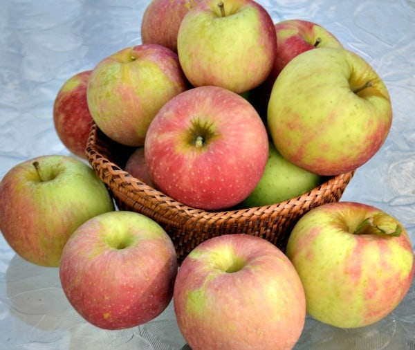 Fresh apples for making individual apple pies