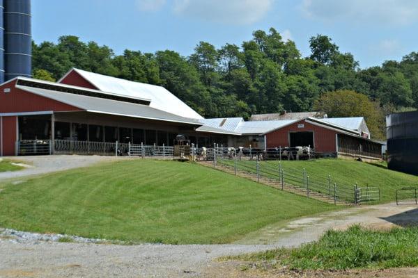 dairy farm pic