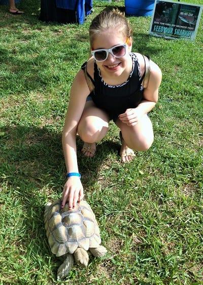 Nicole turtle