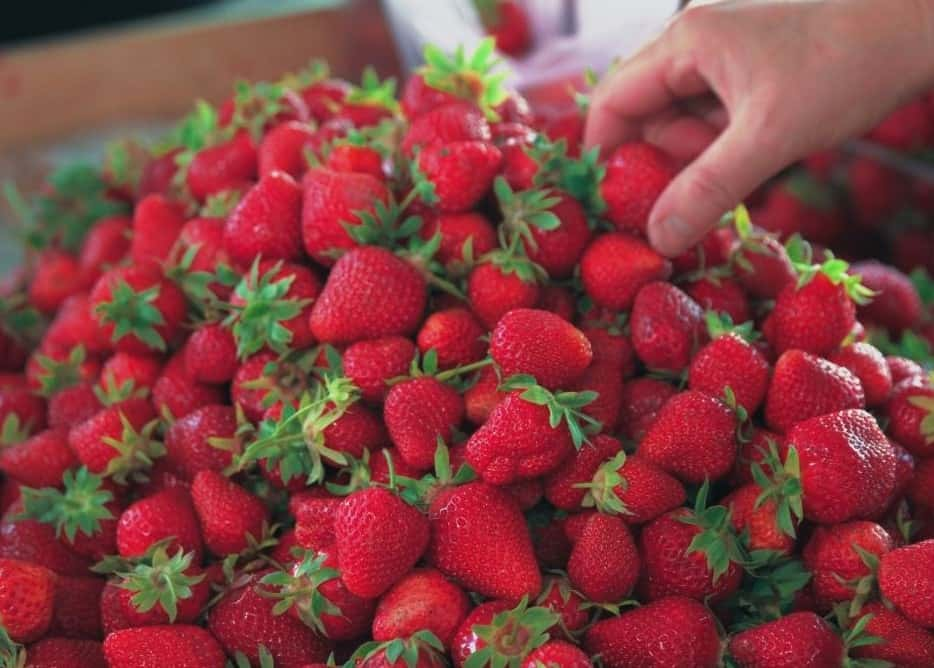pick bright red berries like these