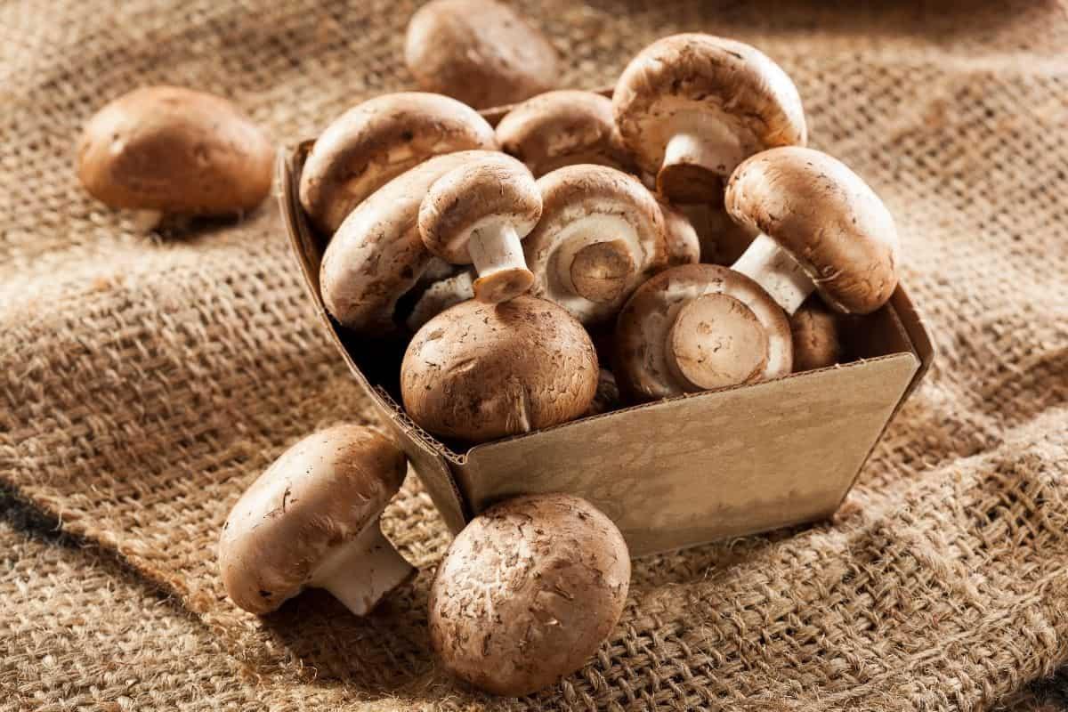 A box of Cremini mushrooms work great in this recipe.